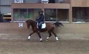 Hest til salg - JUST IN TIME