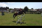 Hest til salg - cosmo