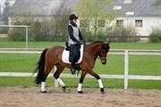 Hest til salg - PATAYA