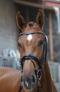 Hest til salg - SHE'S CUTE-KIRIAL