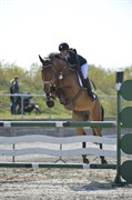 Hest til salg - VITTRUPGÅRDS CARLIGHT