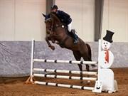 Hest til salg - AMILLEE RAVNES-HAVE