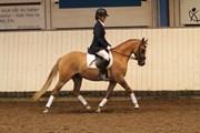 Hest til salg - NØRLUNDS ECLIPSE