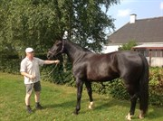 Hest til salg - MIKKELINE AF NØRBY