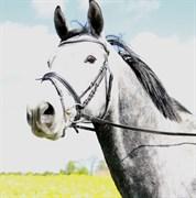 Hest til salg - HUMMER