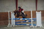 Hest til salg - SPIRIT