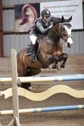 Hest til salg - Mr. Nicknack