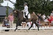 Hest til salg - DE-LAZET-Ø