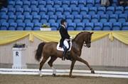 Hest til salg - GROSSO'S ERBE