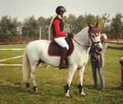 Hest til salg - Sleipner