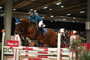 Hest til salg - ELMELÆ'S CALIF