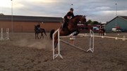 Hest til salg - ASTANA
