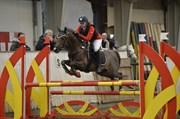 Hest til salg - CÆSAR