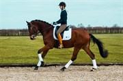 Hest til salg - TINGGÅRDENS ALLSANDRO