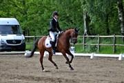 Hest til salg - LUNDGÅRDS NANO