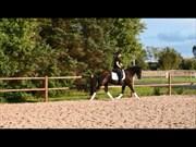 Hest til salg - HELLMERS MILKYWAY