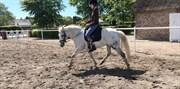 Hest til salg - Møllegårdens Caponi