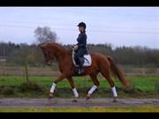 Hest til salg - ENGHAVEGAARDS DOTEA