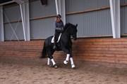 Hest til salg - Dalina Horsewell