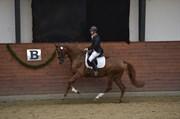 Hest til salg - ØSTERGÅRDENS CELINA