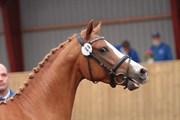 Hest til salg - HM PRINCETON