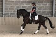 Hest til salg - Go2 Sikasso