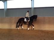 Hest til salg - TIRANA