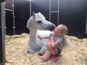 Hest til salg - Elvis pony