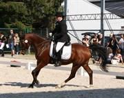 Hest til salg - TA WADIR OX