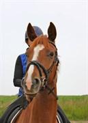 Hest til salg - KOKKEDALS HEROINE