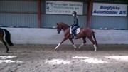 Hest til salg - FANNY