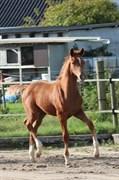 Hest til salg - WHISPER TOFTØJE