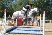 Hest til salg - OX MOUNTAIN WIND