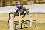 Hest til salg - CLARA