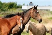 Hest til salg - Donago´s Fabienné