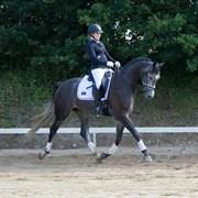 Hest til salg - WONDER LANCE