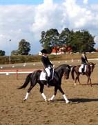 Hest til salg - Penny Lady Naddle