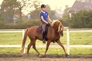Hest til salg - KLELUND´S ROBIN