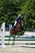 Hest til salg - LINTRUPGAARDS SAKIRA