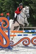 Hest til salg - HUGO BOSS