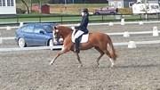 Hest til salg - Meltvedt Solana