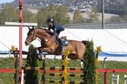 Hest til salg - Dalkin Van Den Bisshof