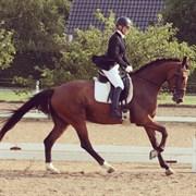 Hest til salg - ZUPERNOVA