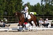 Hest til salg - NIA LILLE LUNDEN