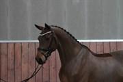 Hest til salg - GØRKLINTGÅRDS QUINCY