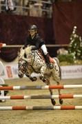 Hest til salg - BANDIT