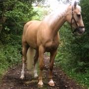 Hest til salg - BELL FEODORA