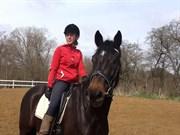 Hest til salg - Cortido