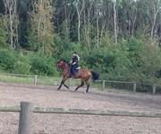 Hest til salg - VAINCOEURE VH BLOEMENHOF
