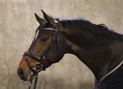 Hest til salg - KRONBORGS MALOU